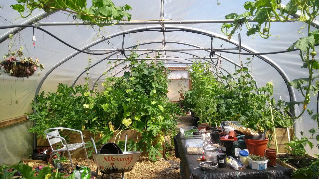 Albany Gardening Club