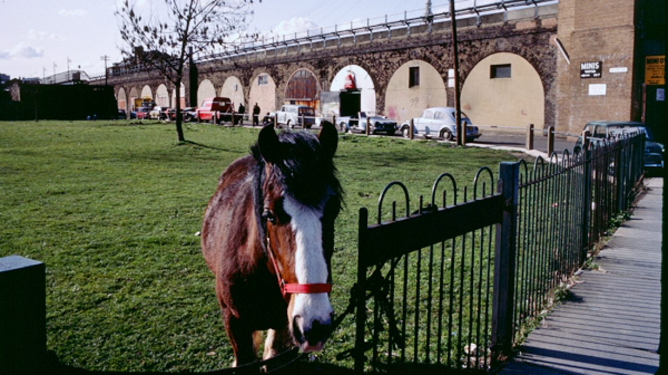 Horse tied up at the railings in a field on Deptford Church Street. Railway line and arches in the background.