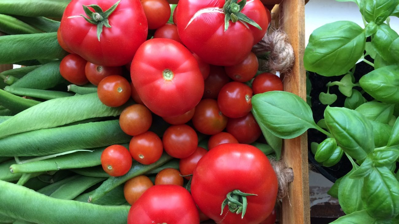 Grow Your Own… Tomatoes