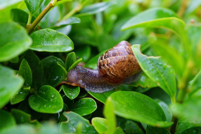 Keep Your Garden Clear of Slugs and Snails