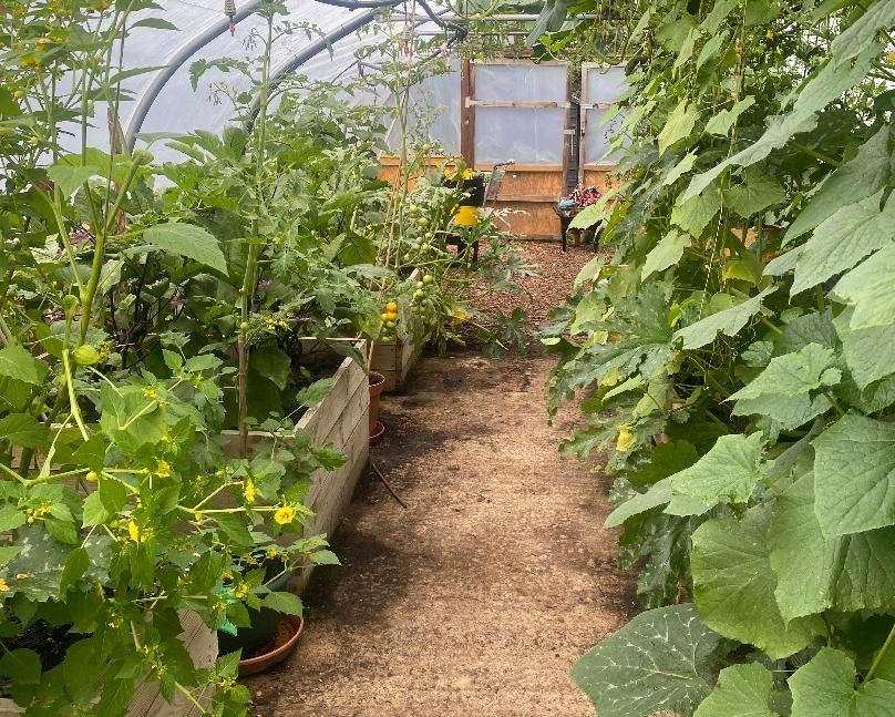 The Albany Garden polytunnel